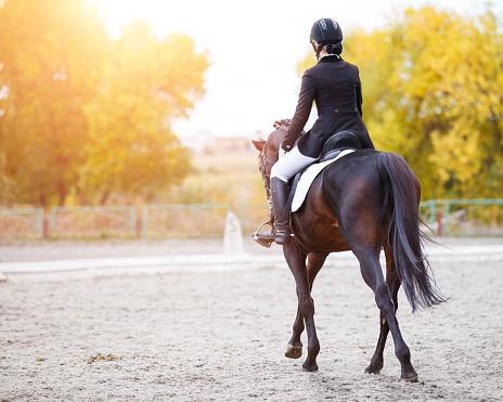 accessoires pour passionner chevaux