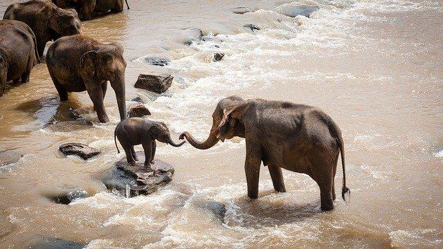 famille elephants
