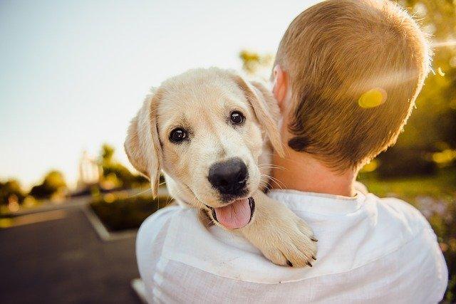 chien sauvé par un homme