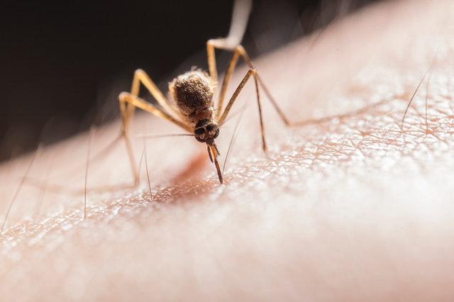 répulsif moustique