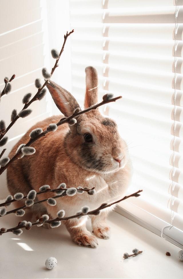 les jouets pour divertir un lapin