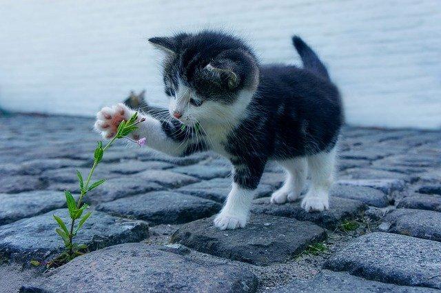 chaton dehors