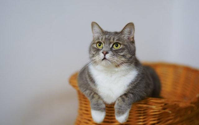 utilisation de la trappe chat