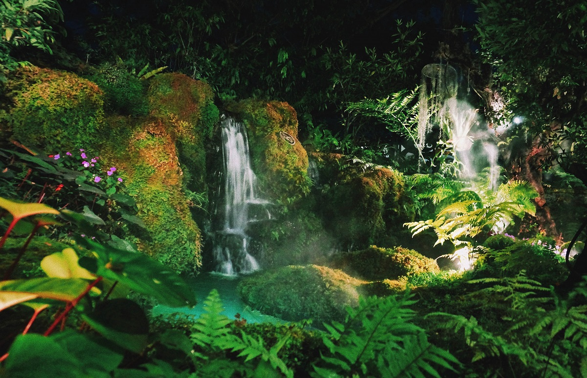Tropical Rainforest: Definition and Its Significance in the World